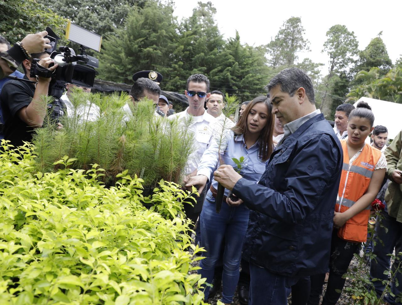 Presidente Hernández visita exitoso proyecto de viveros en la UNACIFOR