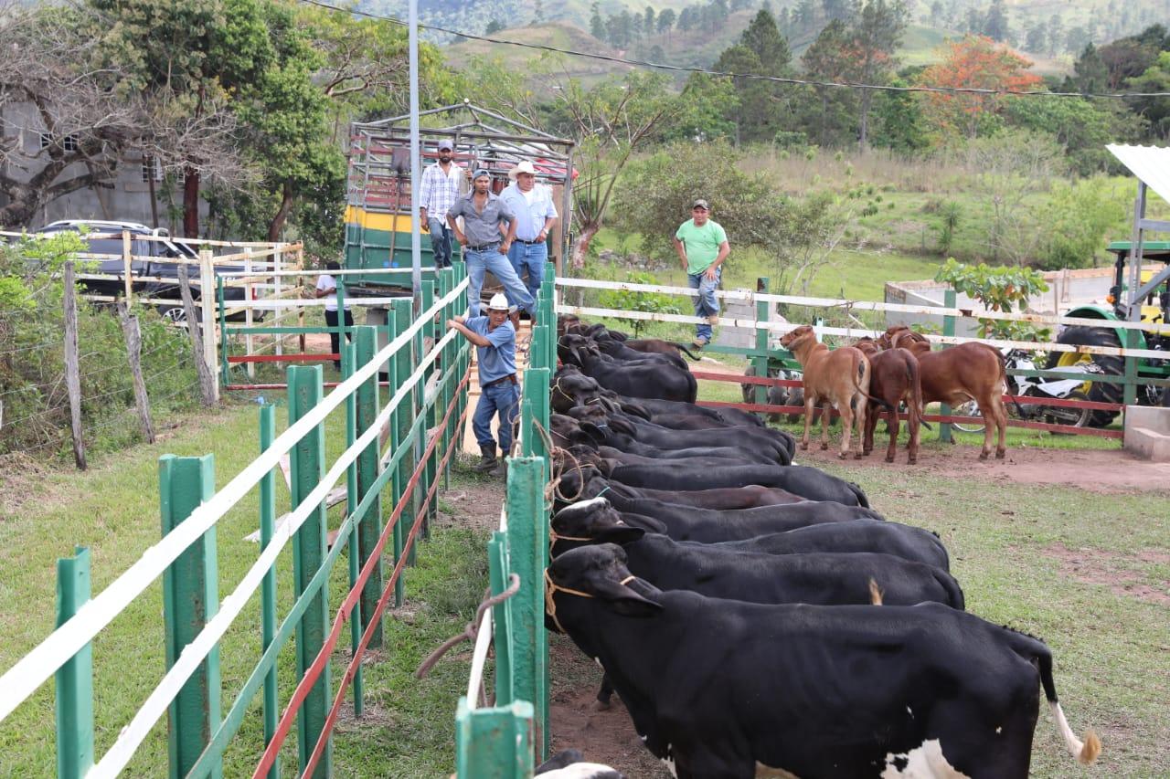 Presidente Hernández lanza el primer Distrito Lechero del país en Subirana (Yoro)