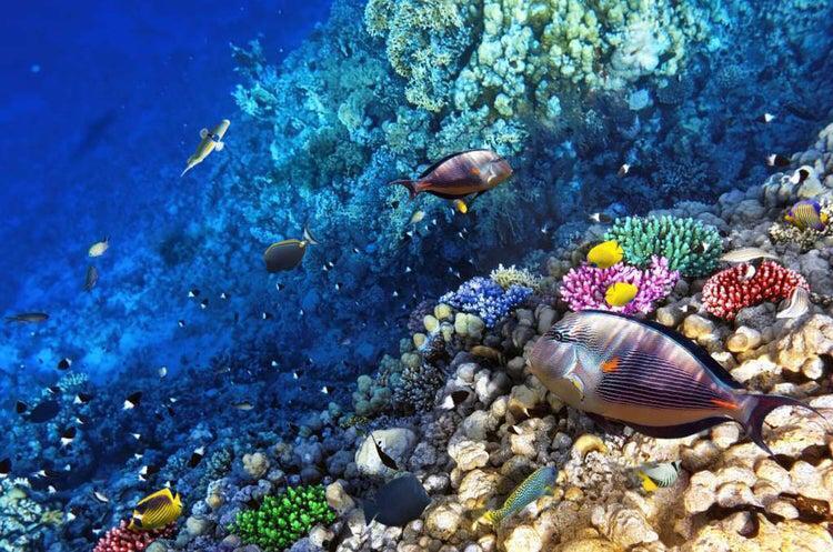 Inician proyecto para la conservación y restauración de arrecifes de coral