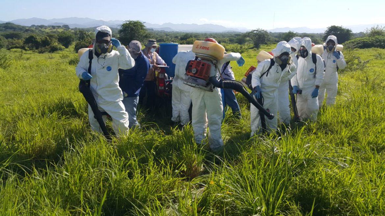 FF.AA trabaja para evitar plaga de langosta en zona sur del país