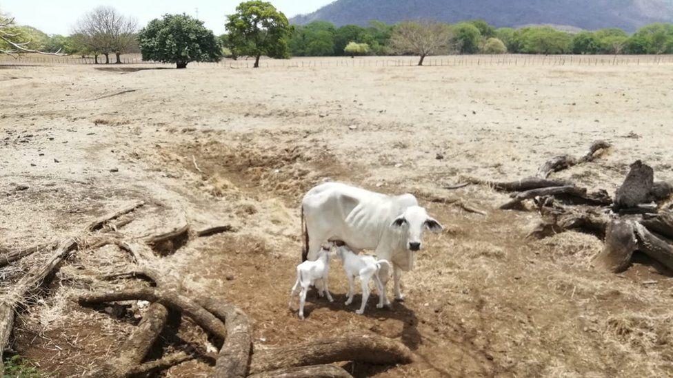 Copeco construye Sistema de Alerta Temprana piloto para atacar sequía en Corredor Seco