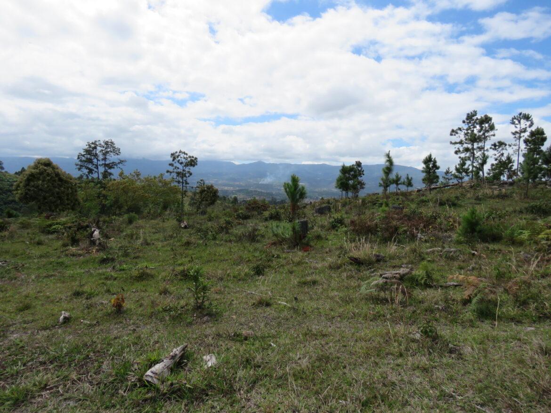 Mañana inician intensas jornadas de reforestación en Siguatepeque