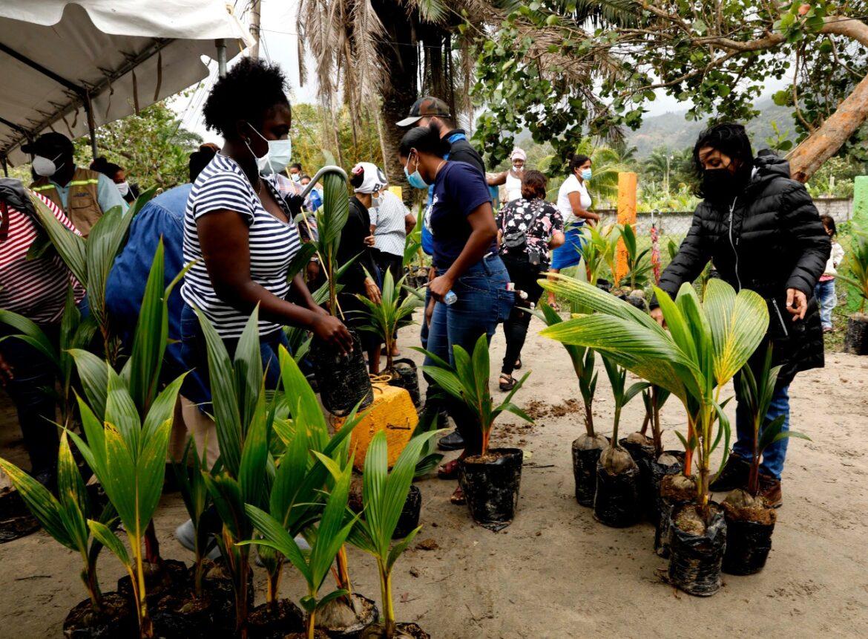En Corozal y Sambo Creek: Gobierno entrega 1.000 plantas de coco a 40 productores garífunas para potenciar este cultivo tradicional