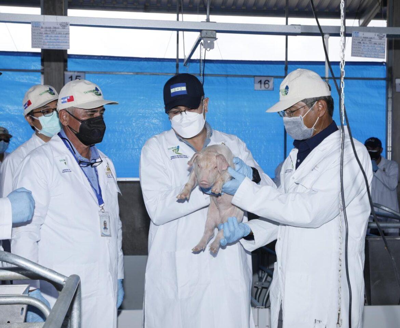 Presidente Hernández inauguró Centro de Genética Porcina más grande, moderno y tecnológico de Centro América
