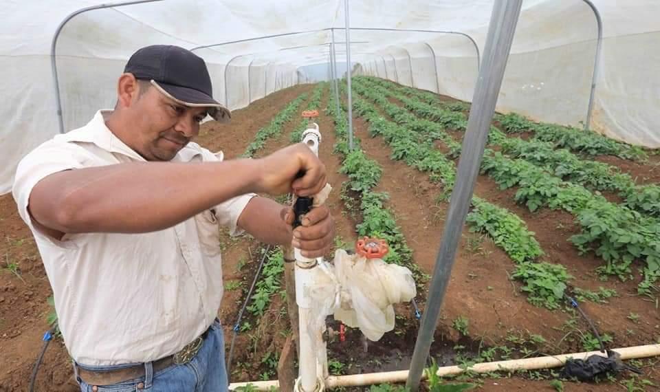 Bonos del sector agrícola contribuyen al desarrollo sostenible y mejoramiento de la seguridad alimentaria